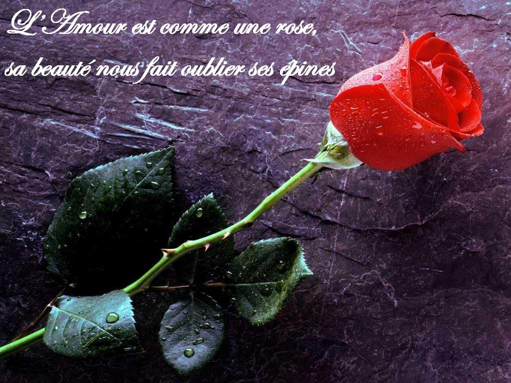 La Rose Et L Amour